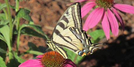 Attracting Pollinators: 10-Minute University™ Noon-Time Chat tickets