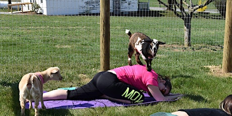 Cool Hollow Goat Yoga with Dixie tickets