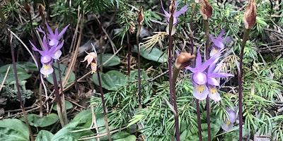 Native Plant Walk at Reynolds Park