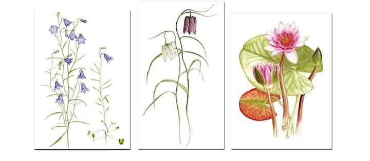"""Margaretha Bååth, Botaniskt måleri -  """"Med Linné i Uppsala & Uppland"""" bild"""