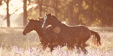 Unbridled Teens & Tweens: Mindfulness & Empowerment with Horses tickets