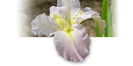 Tulsa Area Iris Society show and plant sale tickets