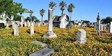 Galveston's Trinity Cemetery Tour & Wildflower Photo Tips tickets