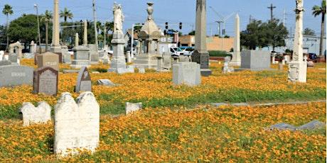 NEW! Tour of Galveston's Evergreen Cemetery in Wildflower Season tickets