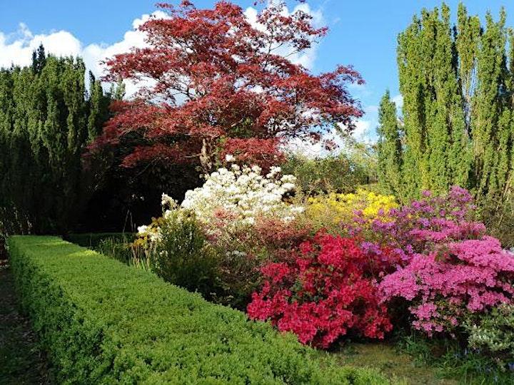 Shobrooke Park Gardens Open 7th May 2021 image