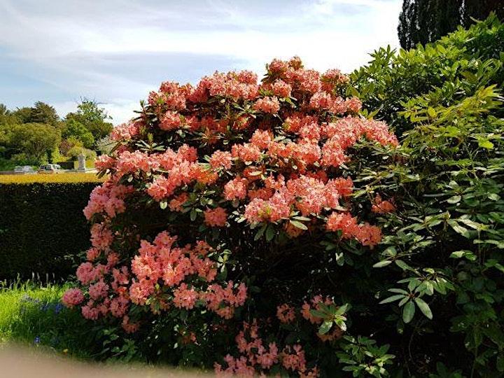 Shobrooke Park Gardens Open 8th May 2021 image
