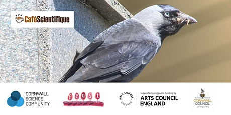 Virtual Café Sci | Social smarts: how jackdaws use each other to learn tickets
