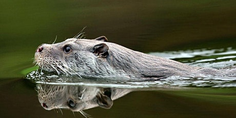 RiverLife Chit-chats: Are otters otterly brilliant animals? tickets