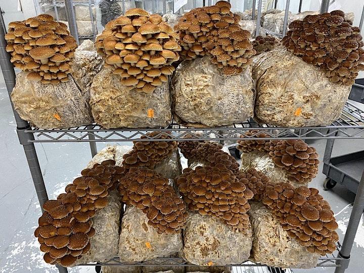 Progressive Medicinal Mushroom Cultivation image