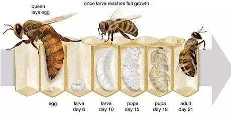 Basic Beekeeping Introduction tickets