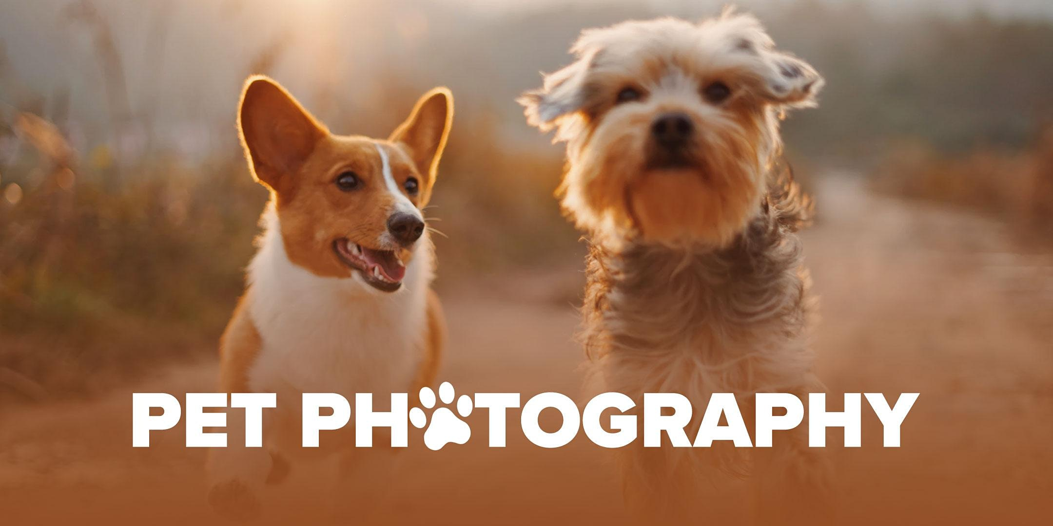 Pet Photography Online Class