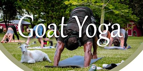 Goat Yoga at The Pleasant Garden Venue tickets
