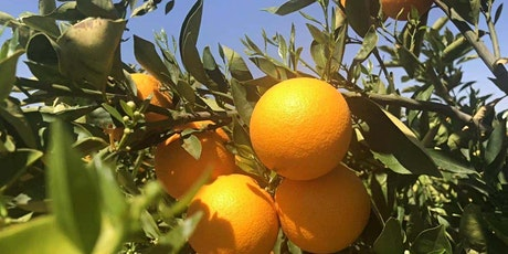 2021 New South Wales, Australia Orange Production Outlook tickets