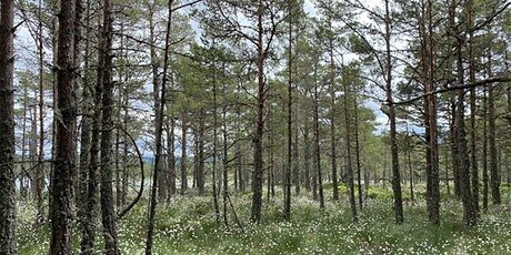 Forest Bathing in the Cairngorms tickets