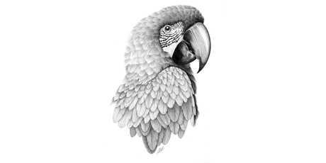 60min Animal Pencil Sketching Art Lesson - Parrot @12PM (Ages 6+) tickets