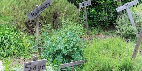 Zonta Gardening Series - Herb Gardening tickets