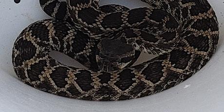 Rattlesnake Aversion Training (1 Session) tickets