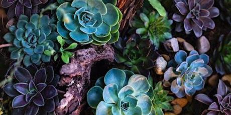 Succulent Gardening tickets