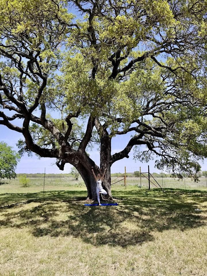 Vino Vinyasa at Texas Wine Collective image