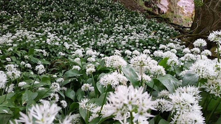 Spring Greens image