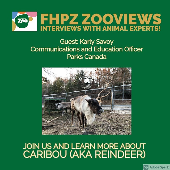 Zooviews - Guest Karly Savoy speaking on Caribou (aka Reindeer) image