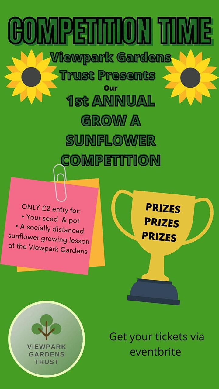 Sunflower Competition image