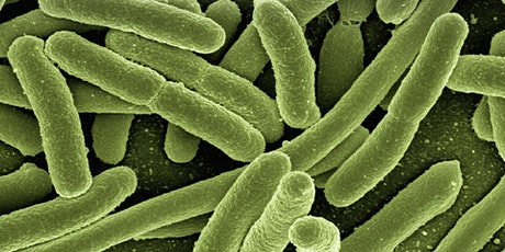 Bacterial variant calling with Galaxy tickets