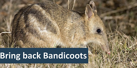 Bring back Bandicoots - Conservation Volunteers Australia tickets