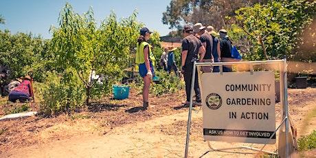 Edible Pruning Series - Workshop 1: Deciduous Fruit Trees tickets