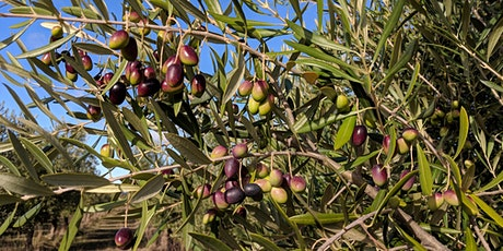 Community Olive Pressing Day 2021 tickets