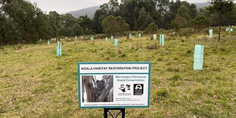 Koala Food Tree Planting Day - Somers tickets