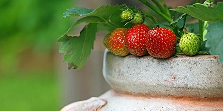 How to grow food in containers! tickets