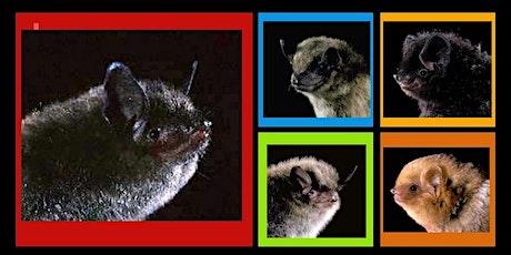 Bat Talk with Maureen Heidtmann, Master Wildlife Conservationist tickets