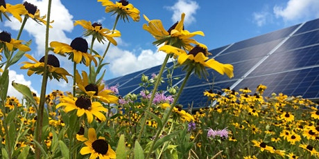 Pollinator Friendly Community Solar Webinar tickets