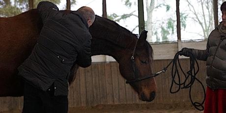 HORSE bodyforming (Faszientraining in der Bewegung) - Modul 3 Tickets