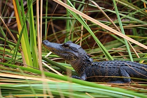 Everglades+National+Park+Day+Trip+with+Roundt