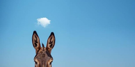 One Day Sitting:  Riding the (Mind) Donkey tickets