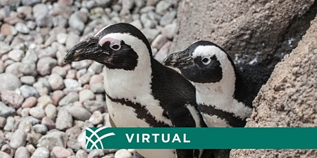 Animals Have PRIDE, Too: Virtual Chat tickets