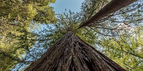 Terrific Trees - Online Treetop Tales tickets