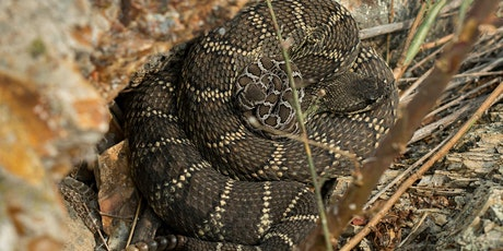 Living With Rattlesnakes tickets