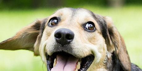 SHELTER DOG ADOPTION EVENT tickets