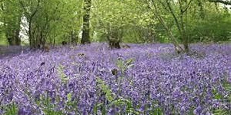 Pi Singles Bluebell Woods walk and lunch in Totnes tickets