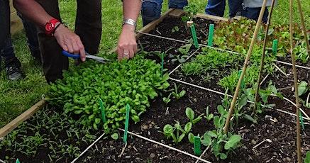 Les associations de plantes sur petites surfaces billets
