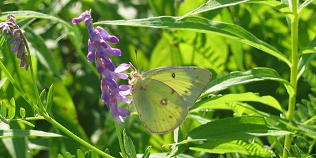 Annual Butterfly and Bug Walk tickets