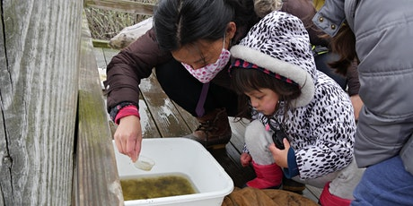 Pond Dipping Activity tickets