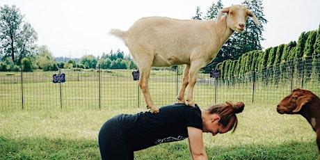 Membership Event - Goat Yoga tickets