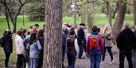 VISIOCONFÉRENCE :  Bain de forêt et présence attentive billets