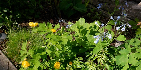 Native Plants for a Healthy Watershed tickets