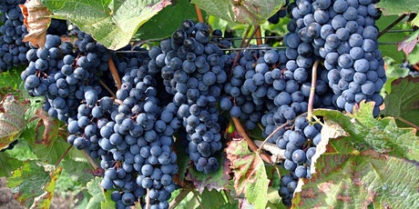 Texas Advanced Grape Grower Workshop tickets