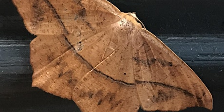 Moths in the Evening tickets